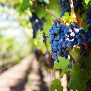 https://guide-des-saveurs.fr/wp-content/uploads/2019/03/domaine-viticole-1280x1280-320x320.jpg